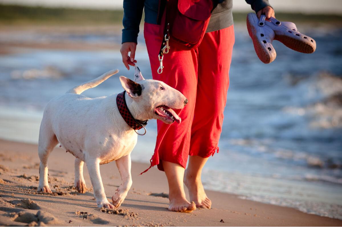 Un perro que sigue a un ser humano.