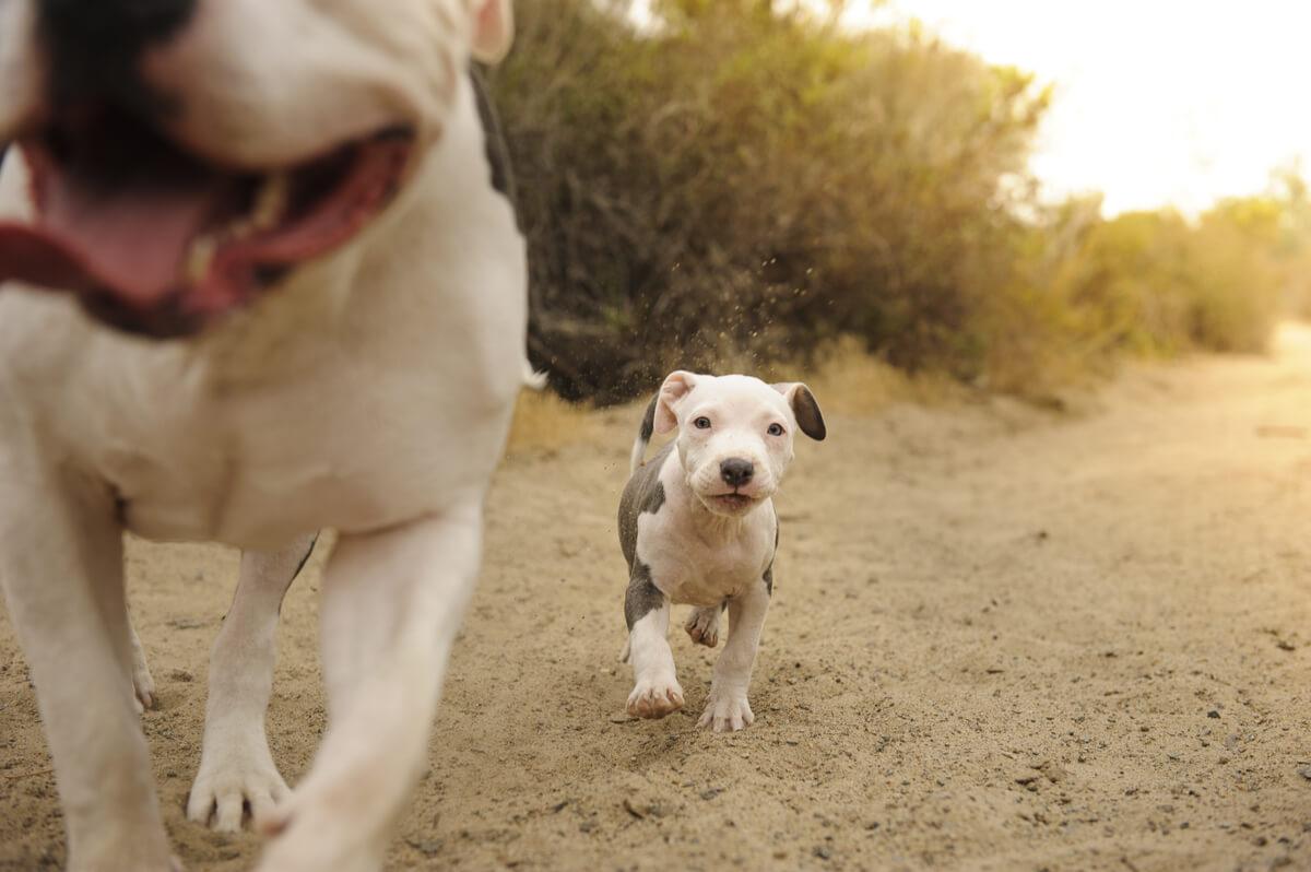 Un perro que sigue a otro perro.