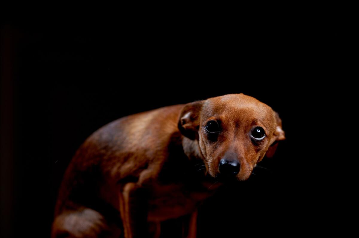 Un perro triste sobre un fondo negro.