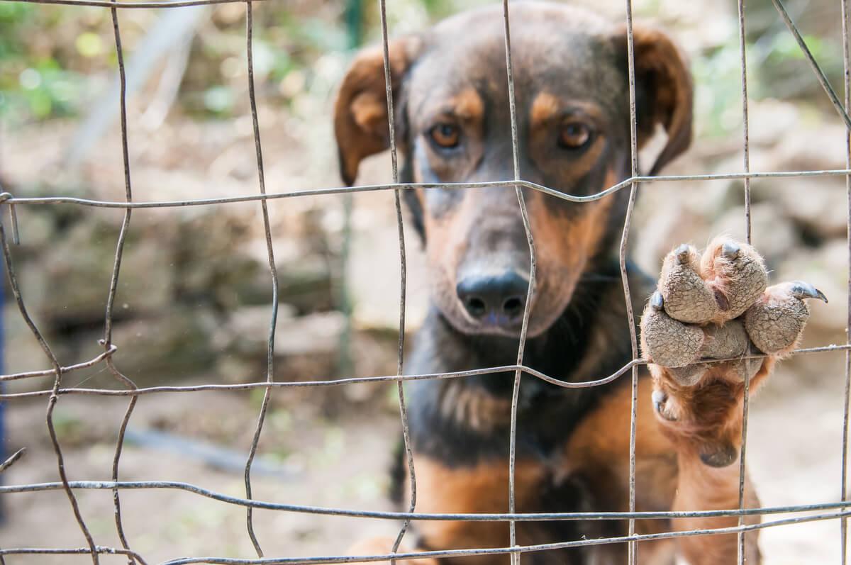 Un perro triste mirando por una verja.