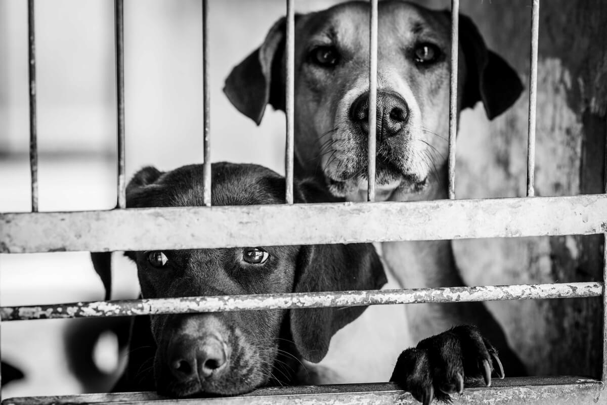 Un perro apoyado en una verja en una imagen en blanco y negro.