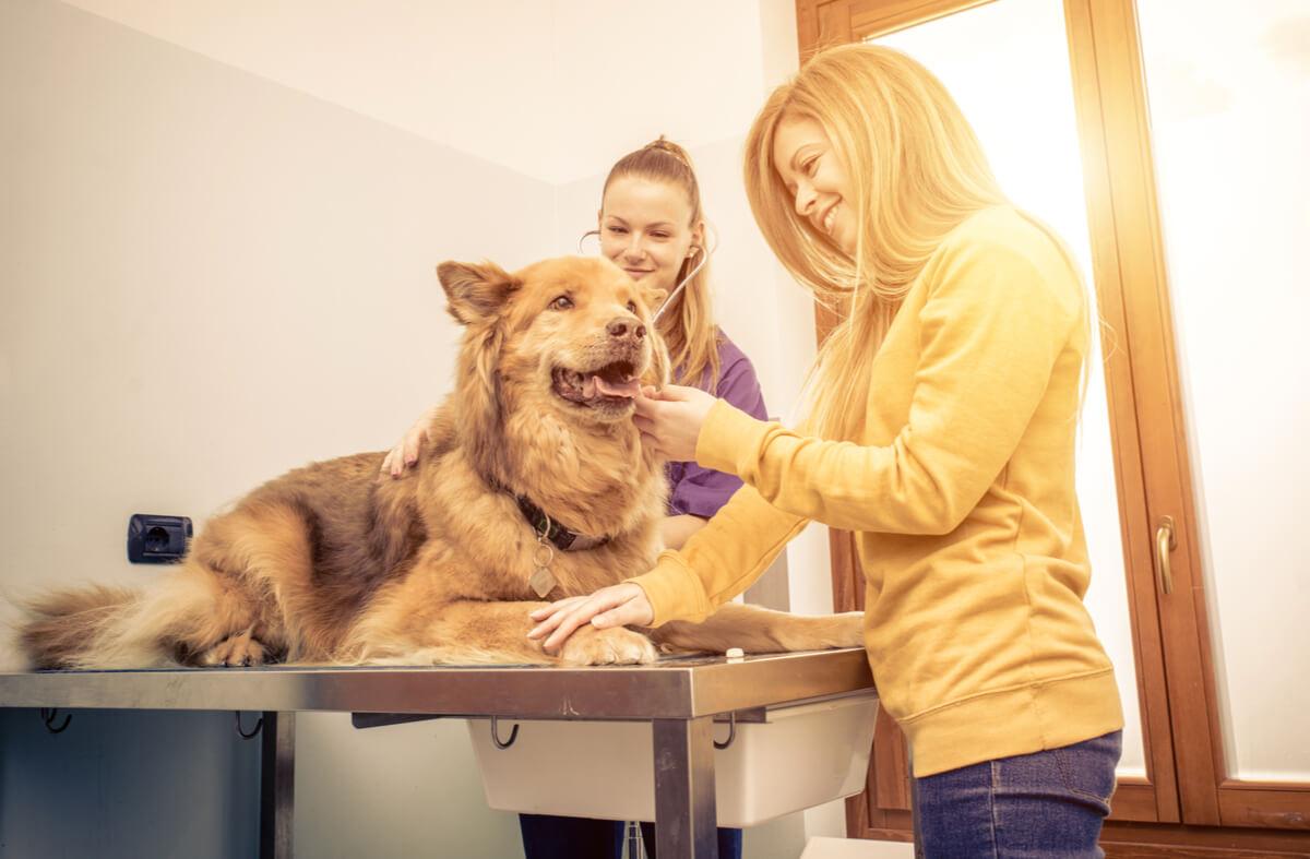 Dificultad respiratoria en perros.