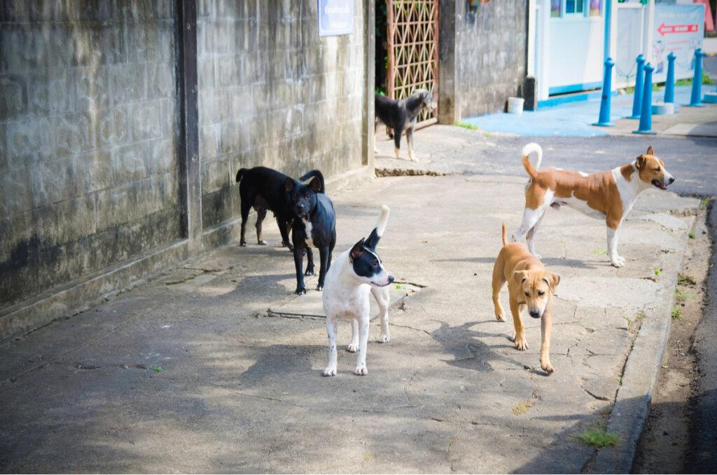 En busca de los perros perdidos tras la explosión de Beirut