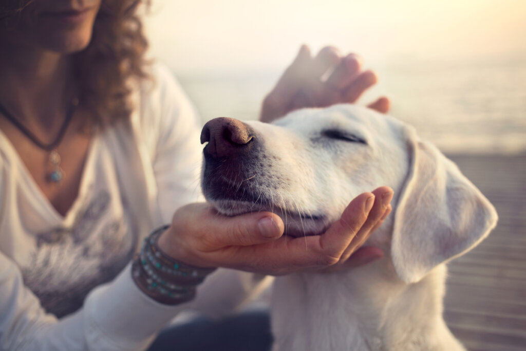 Emergencias respiratorias: la disnea en mascotas