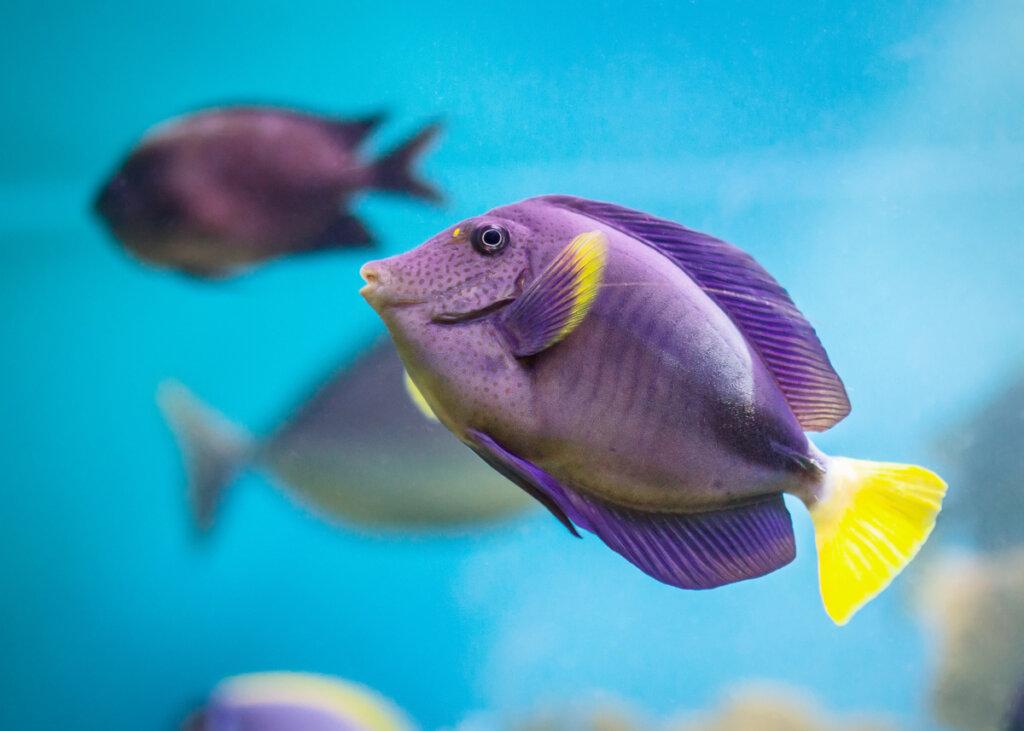 ¿Cómo es el sistema respiratorio de los peces?