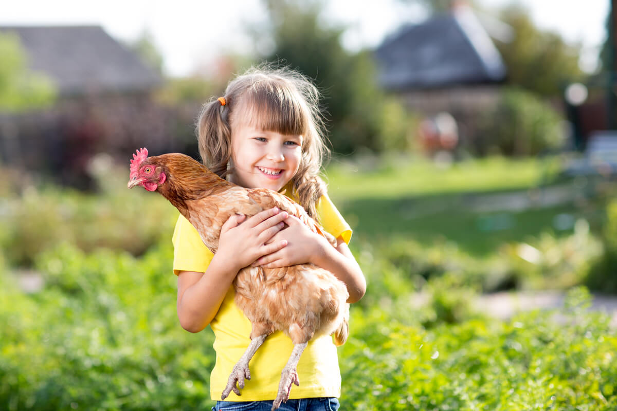 Un pollo campero es abrazado por una niña.