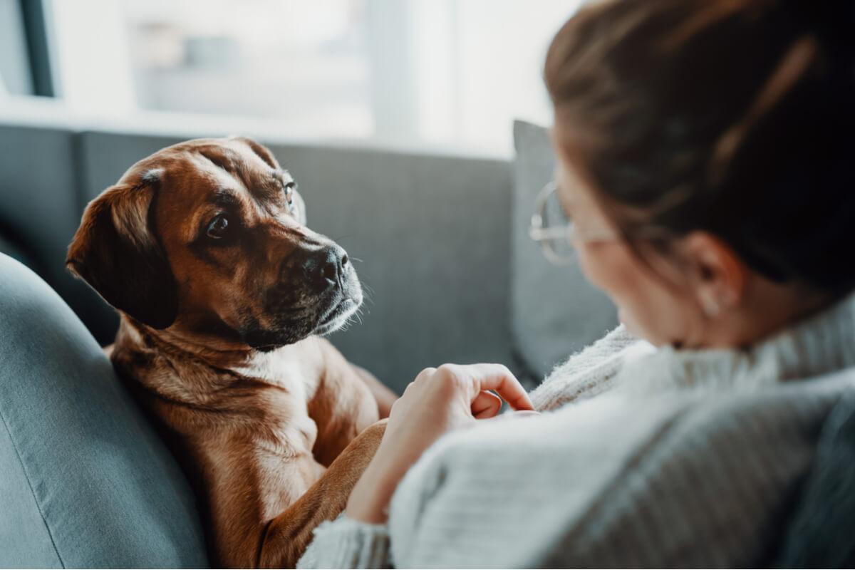 Enfermedades que generan dificultad respiratoria en perros