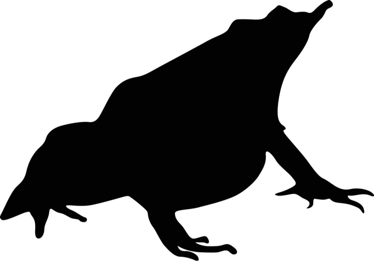 Silueta de una rana de Darwin.