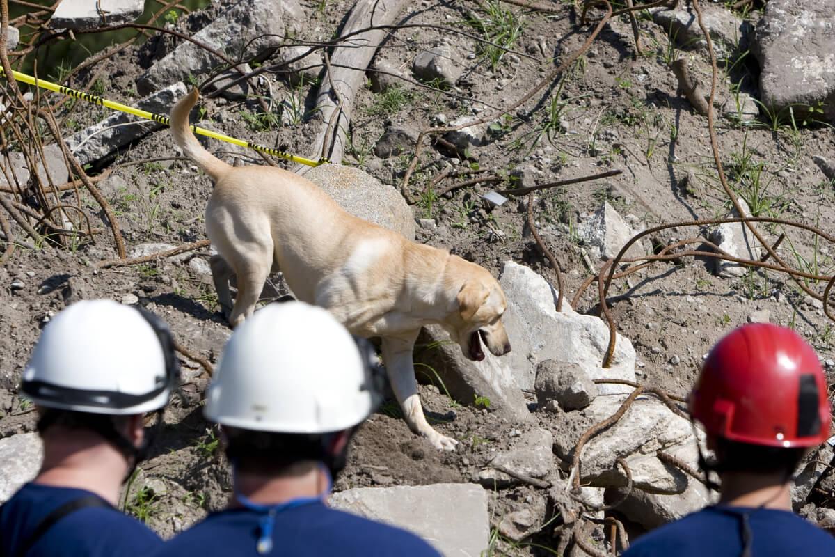 Un perro de rescate en la montaña.