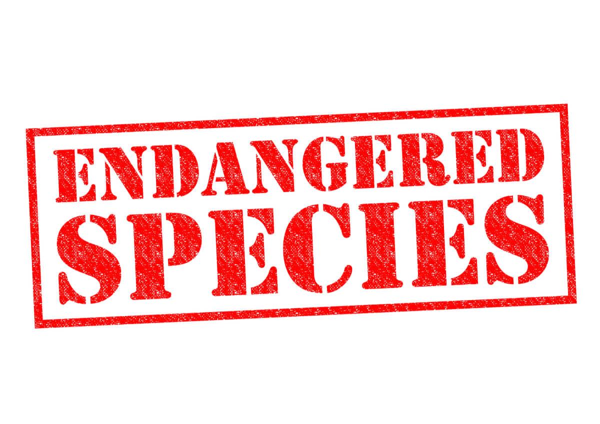 Categorías de amenaza según la IUCN.