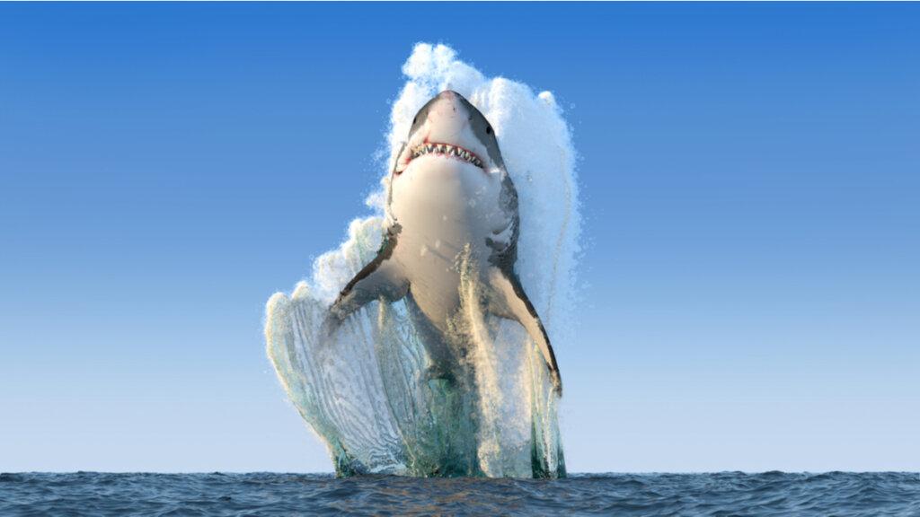 ¿Es cierto que los tiburones no enferman?