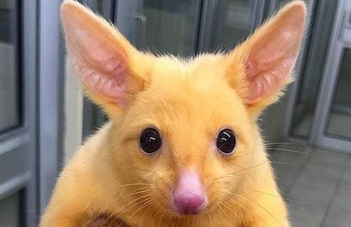 Este animal mutante nos recuerda un pokemon.