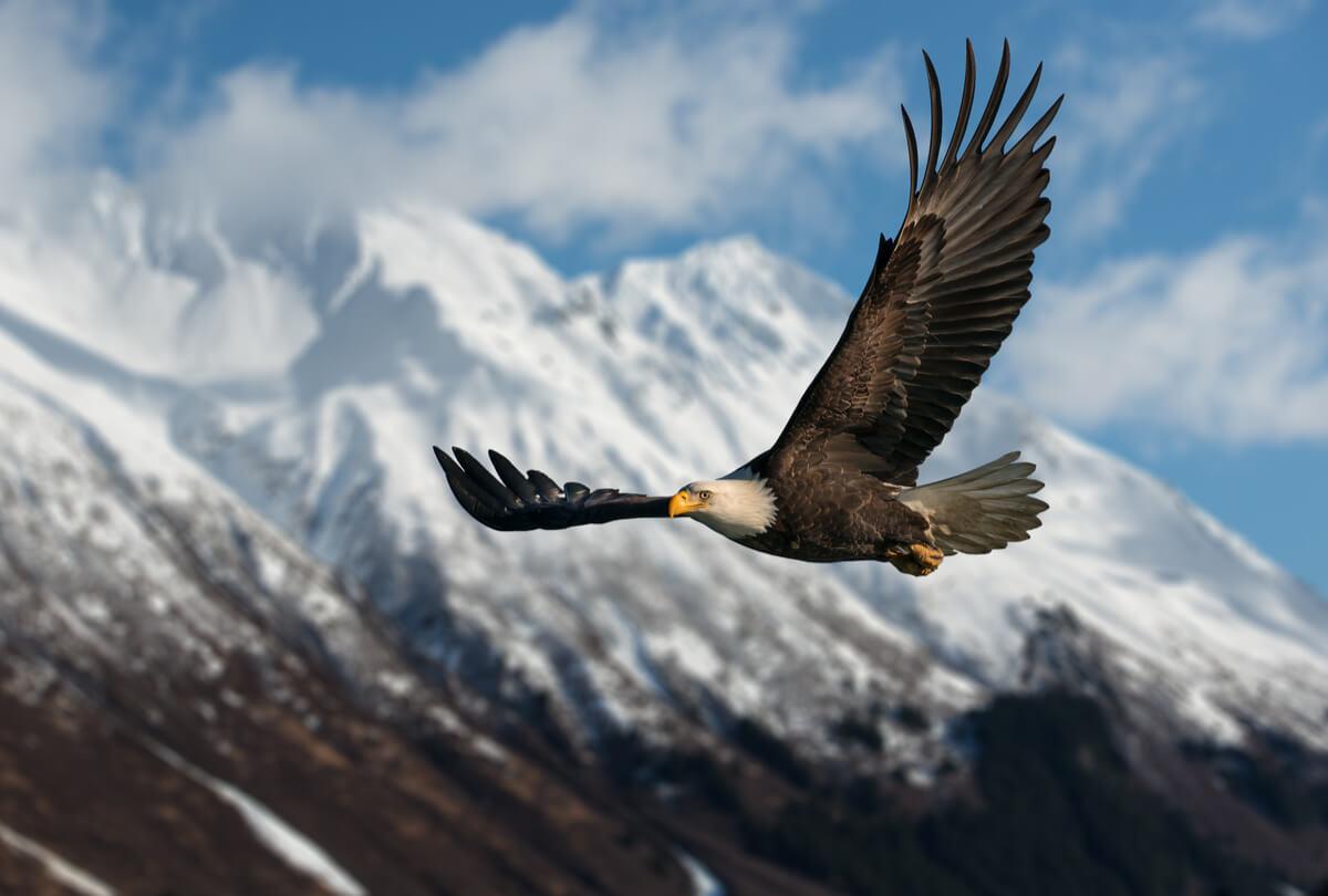 La vista del águila.