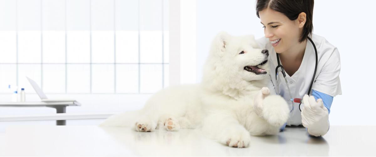 Anemia en perros.
