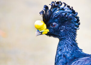 Aves que compiten por tener el pico más raro