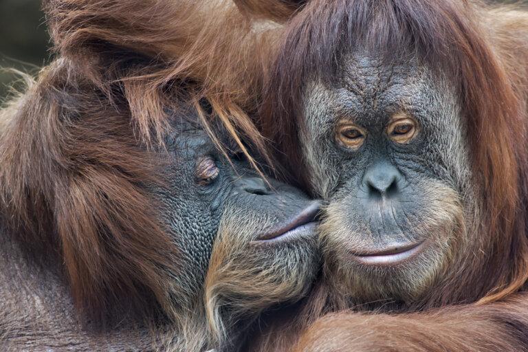 ¿Existen los animales totalmente monógamos?