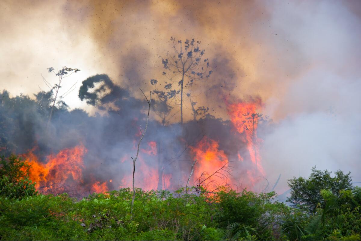 Un bosque en llamas por un incendio.