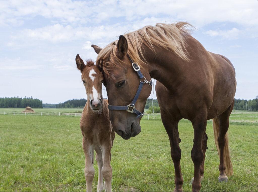 El lenguaje corporal de los caballos