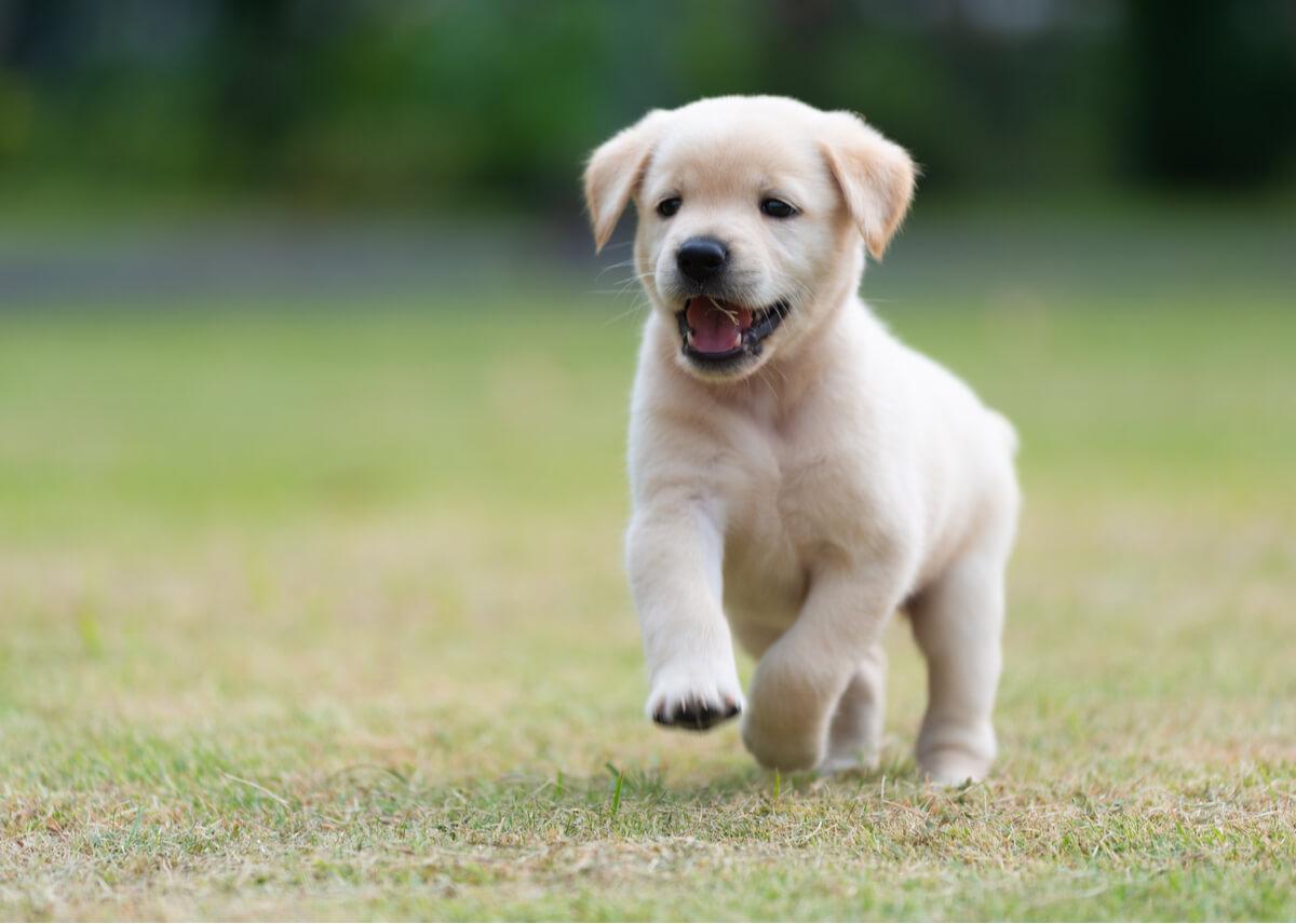 Un cachorro jugando en el parque.