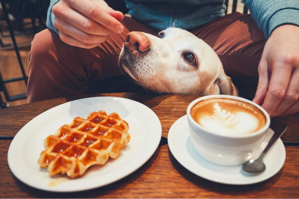 Cafés con cachorros.