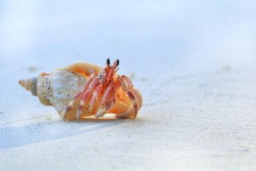 ¿Es malo llevarse las conchas de la playa?