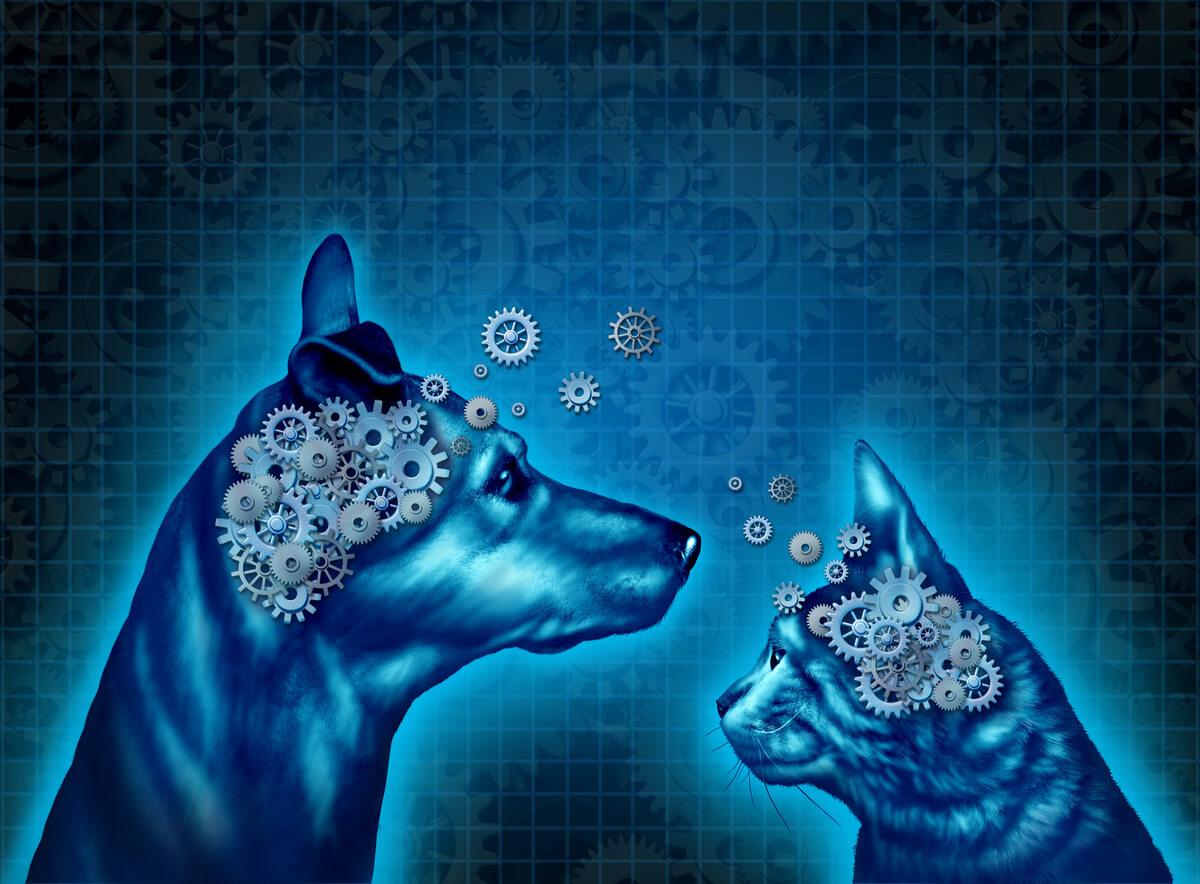 El cerebro dibujado de un gato y un perro.