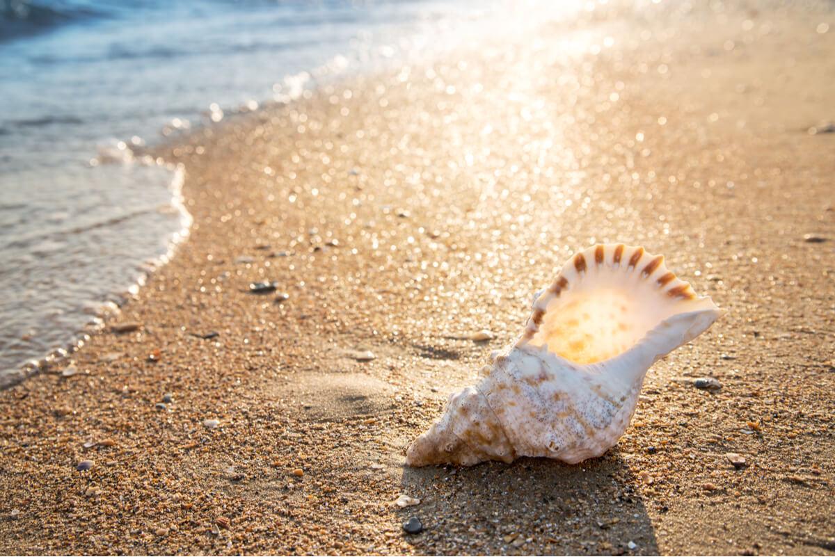 Una concha en una playa.