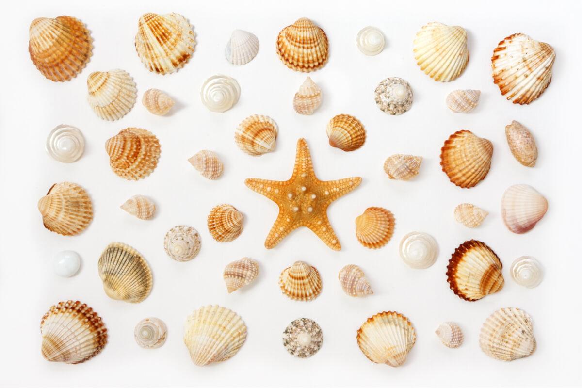 Conchas marinas sobre un fondo blanco.