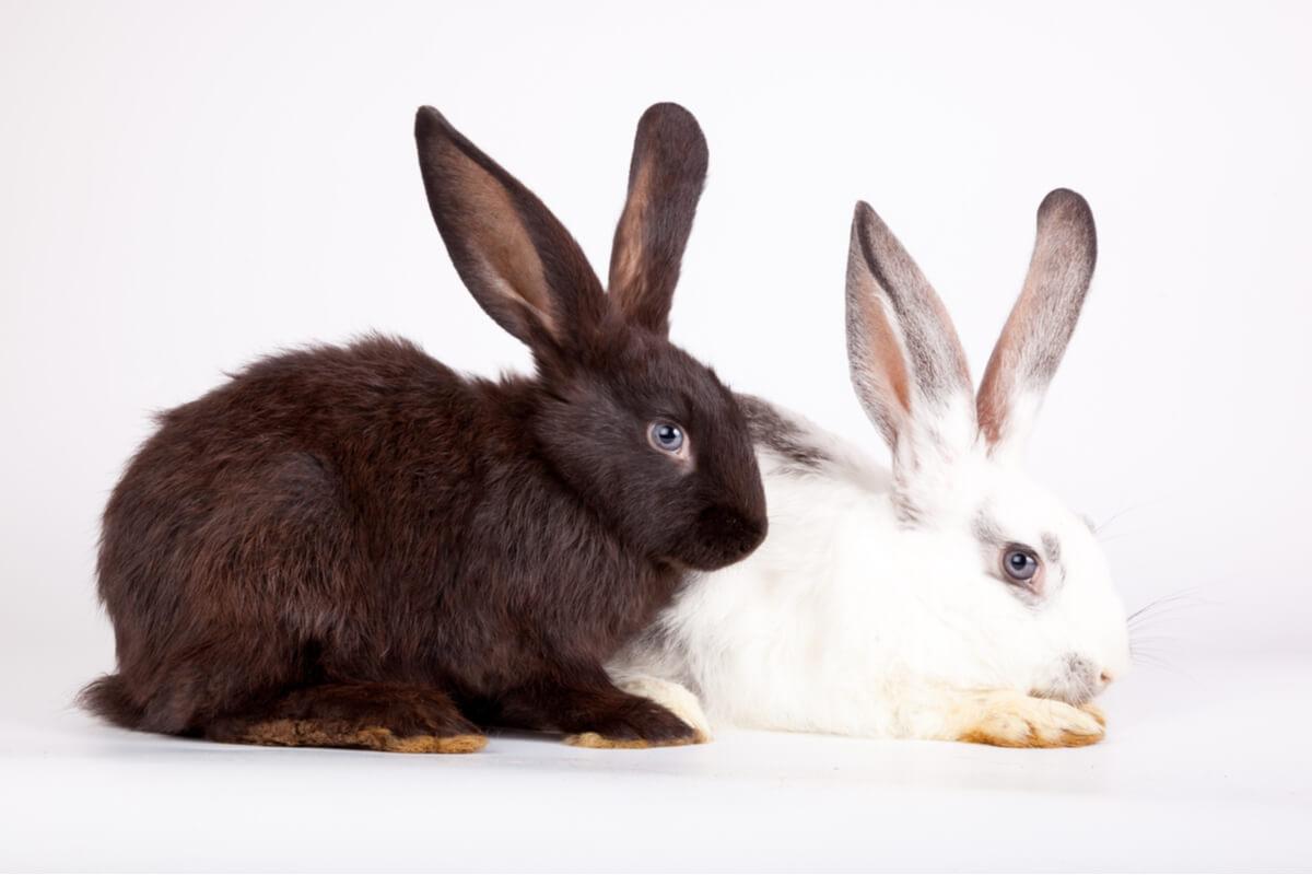 Una foto con conejos blancos y negros.