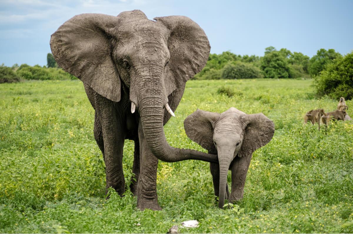 Un ejemplo de instinto maternal en la naturaleza.