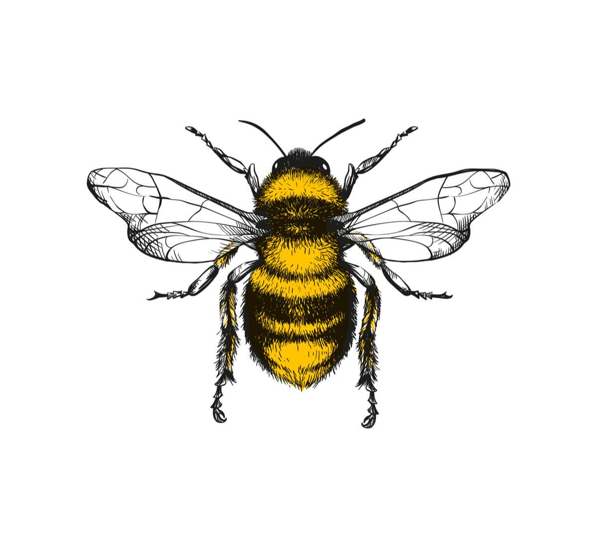 Un dibujo de una abeja.