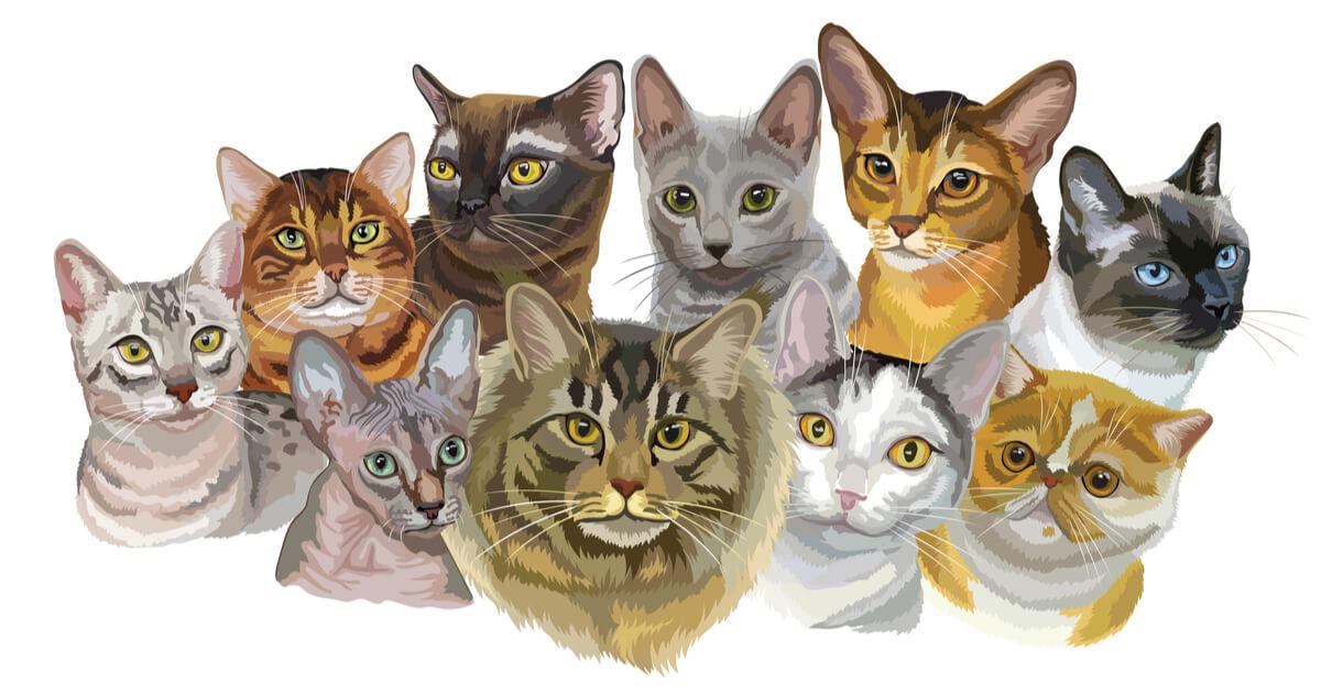 Dibujo sobre razas de gatos.