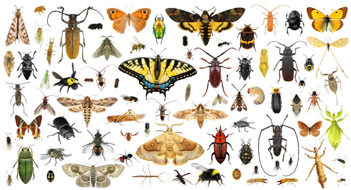 Los insectos son animales sin huesos.