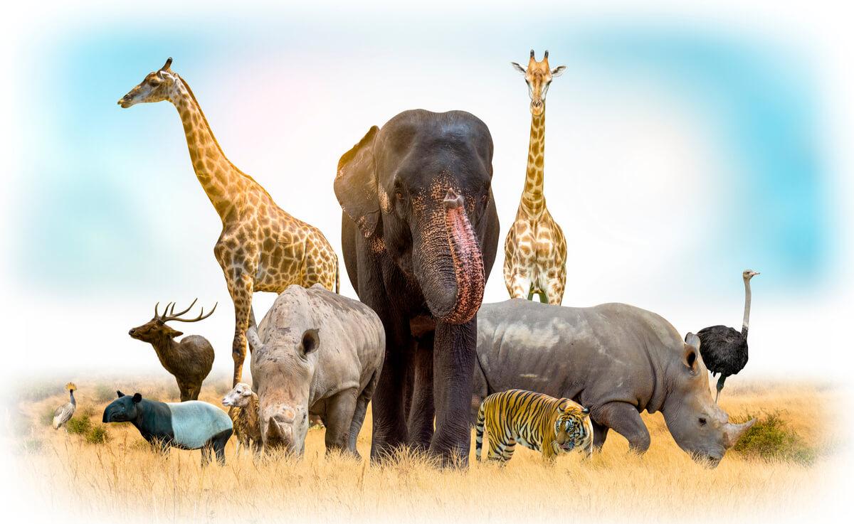¿Qué es la ecología del comportamiento?