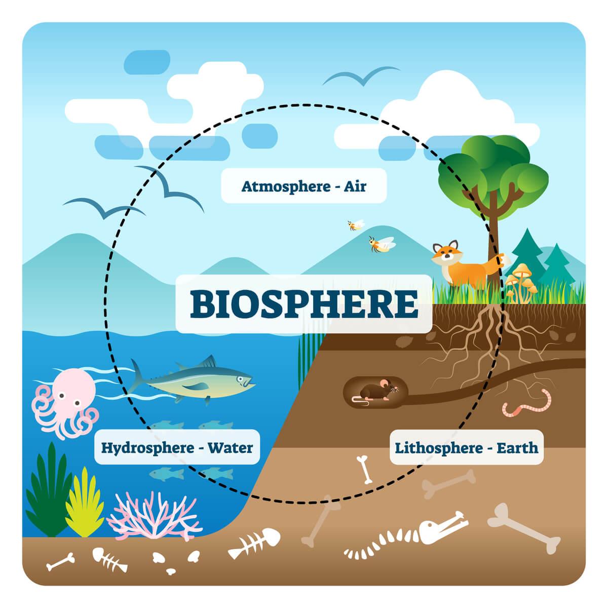 La productividad de los ecosistemas