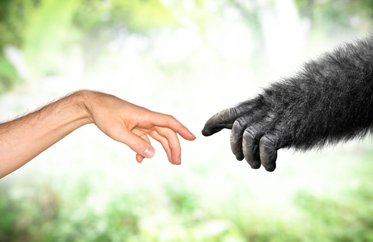 La evolución ejemplificada en una imagen.