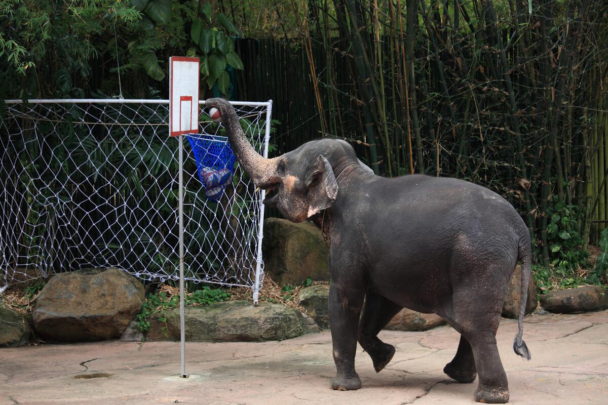 Un elefante che si esercita