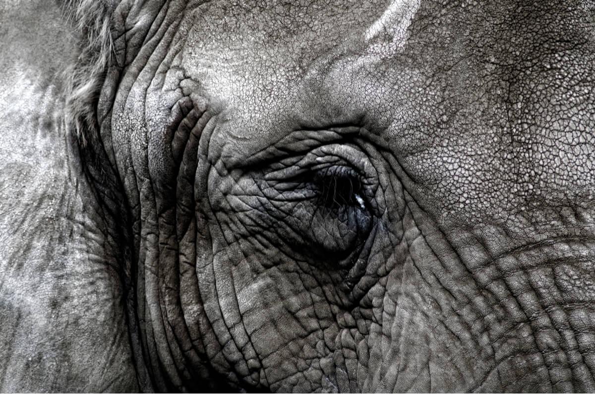 Un elefante triste.