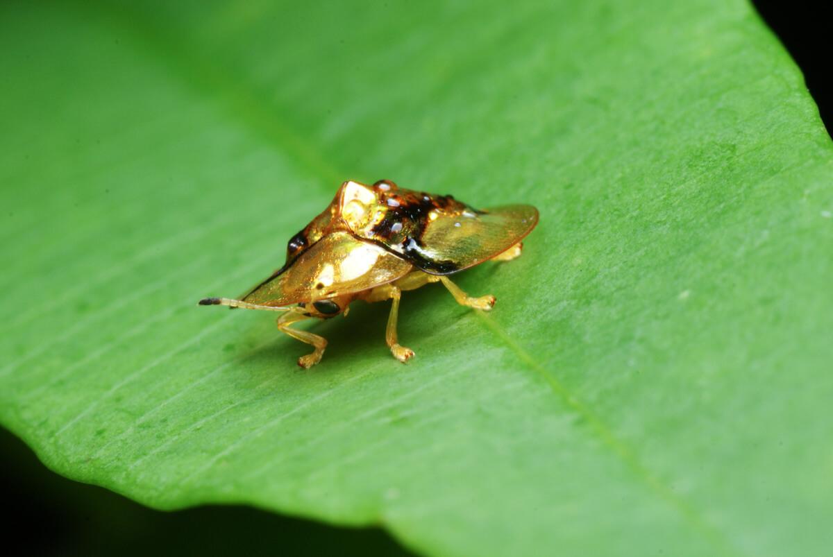 Un escarabajo.