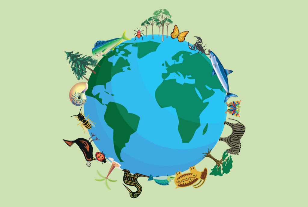 ¿Cuántas especies animales existen en la Tierra?