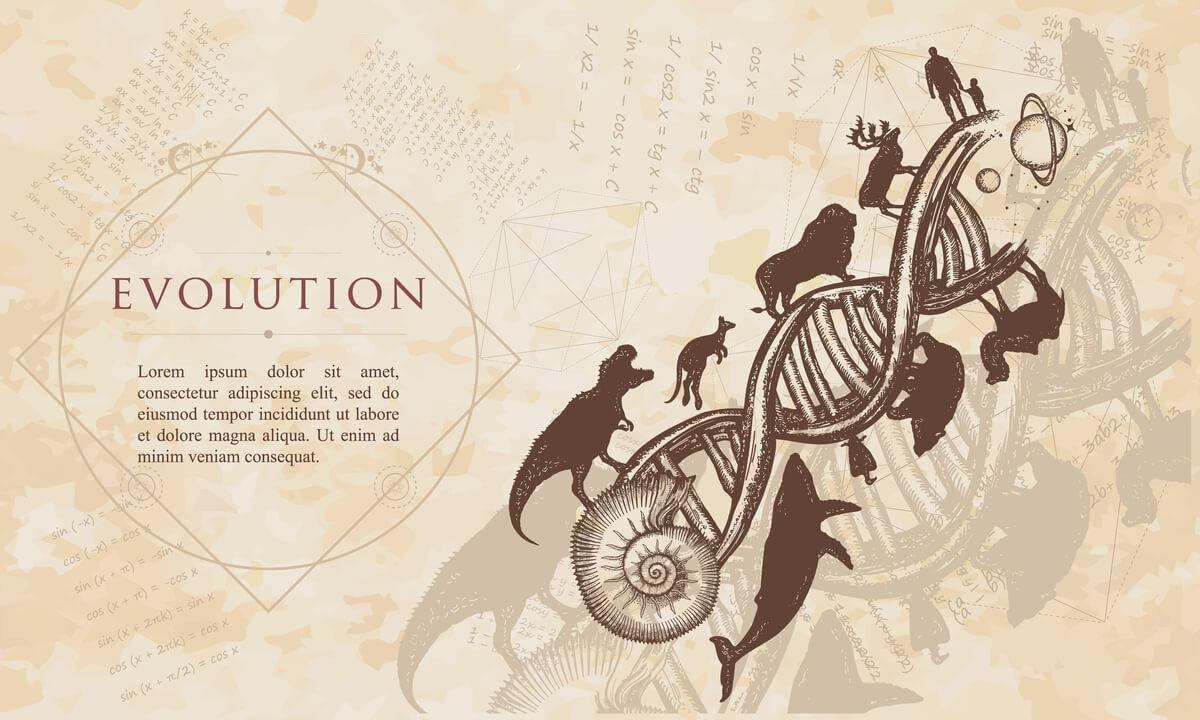 Evolución en el mundo animal.