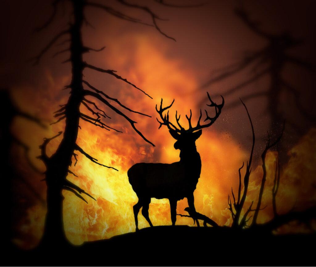Animales rescatados: las victimas de los incendios forestales