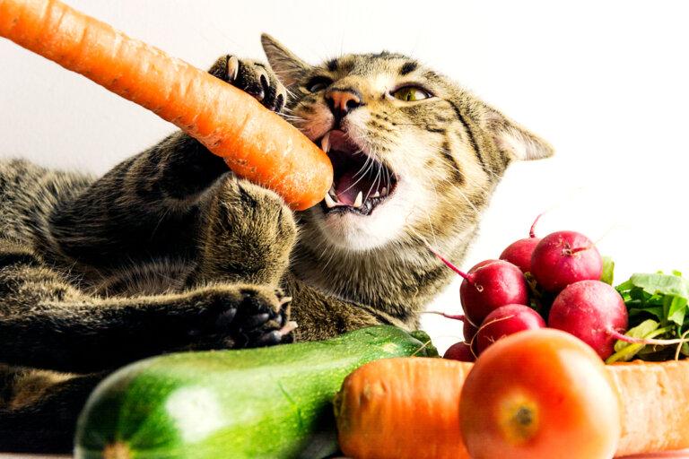 Las dietas veganas para mascotas no son completas, según los expertos