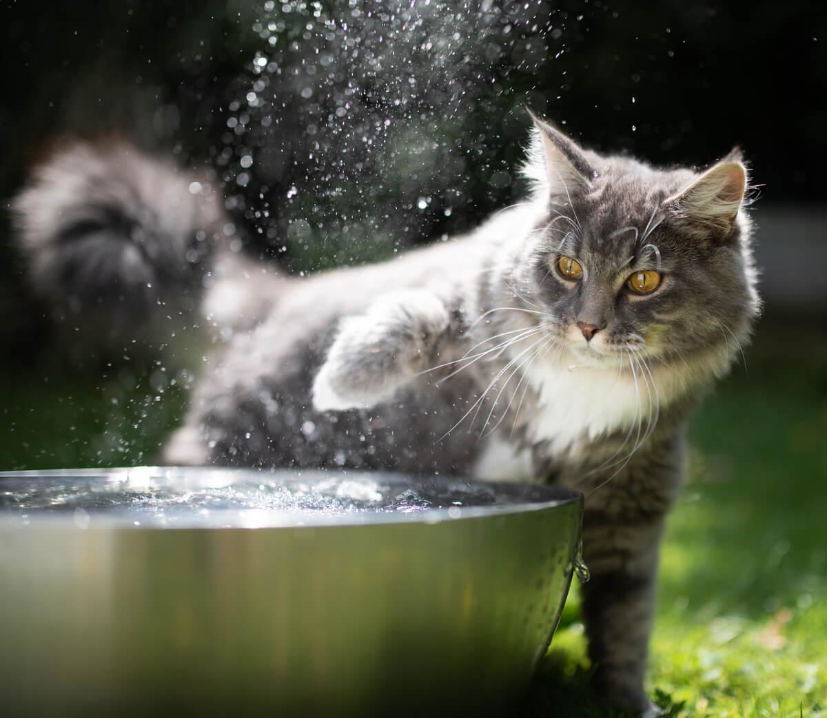 La deshidratación en gatos puede ser grave.