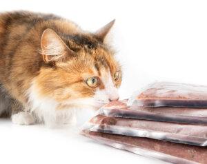 ¿Cuáles son las causas de la salmonelosis en mascotas?