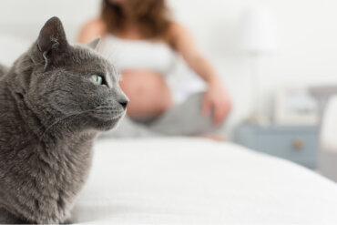 ¿Cuales son los síntomas de toxoplasmosis en gatos?