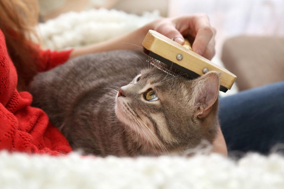 Le brossage des poils chez les chats.
