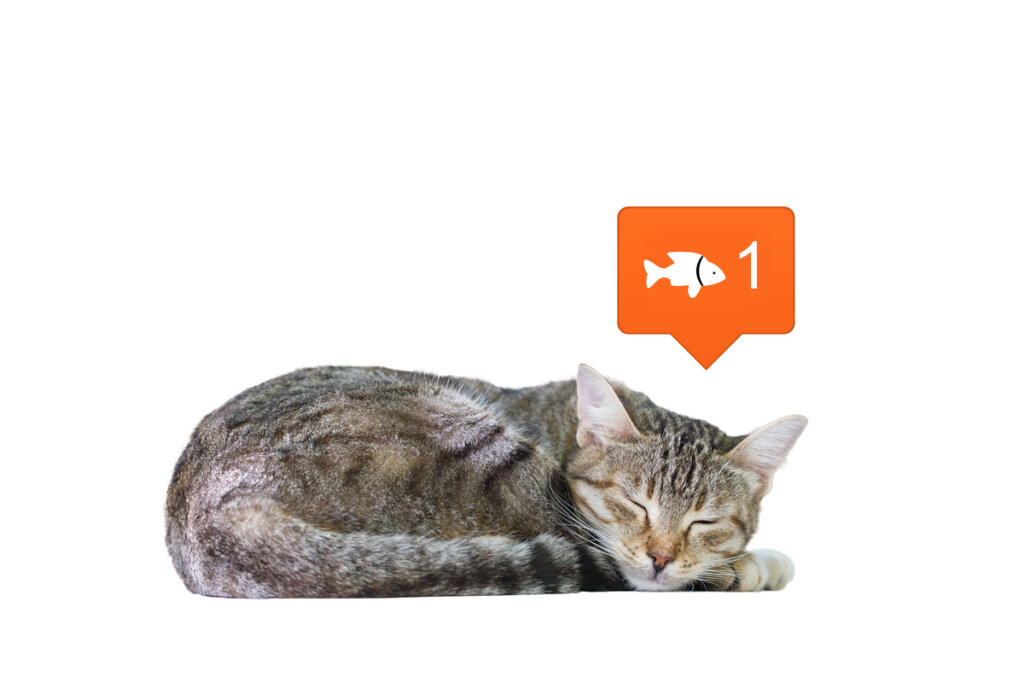 Las redes sociales cambian nuestra percepción sobre los animales