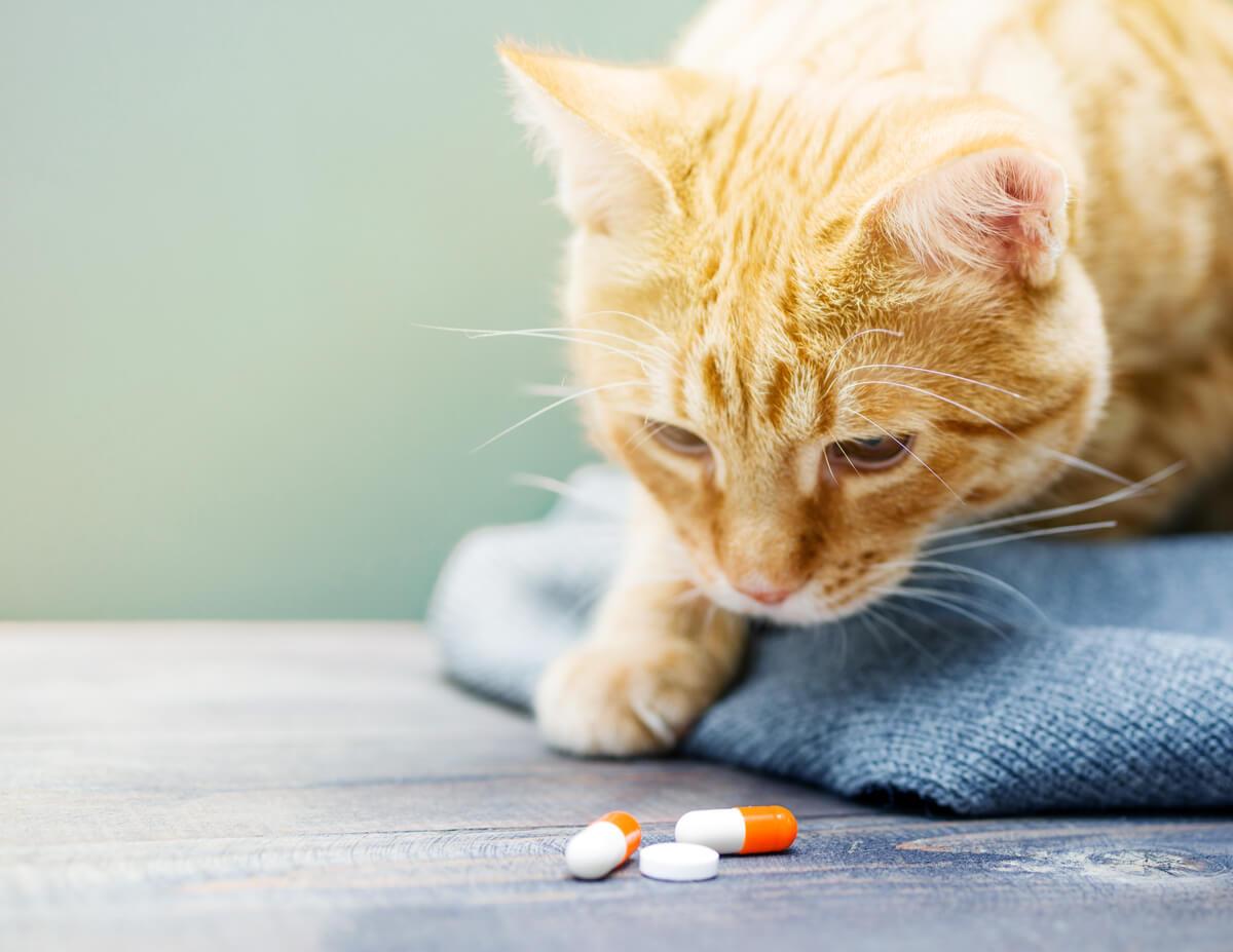 Intoxicaciones en pequeños animales como los gatos.