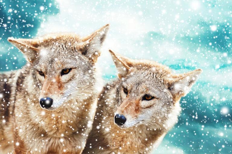 Animales endotermos y ectotermos: diferencias y ejemplos
